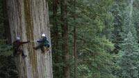 redwoodnationalpark200x113